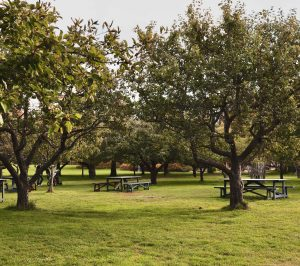 Date ideas: dinner or dessert at a park at a picnic table